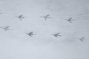 snow-81334_640
