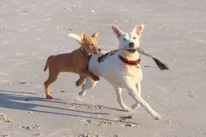 dogs-578090_640
