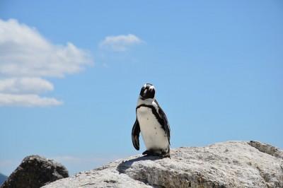 penguin-657527_640
